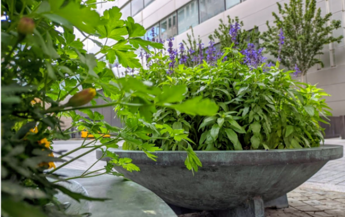 A variety of plants outside Broadgate