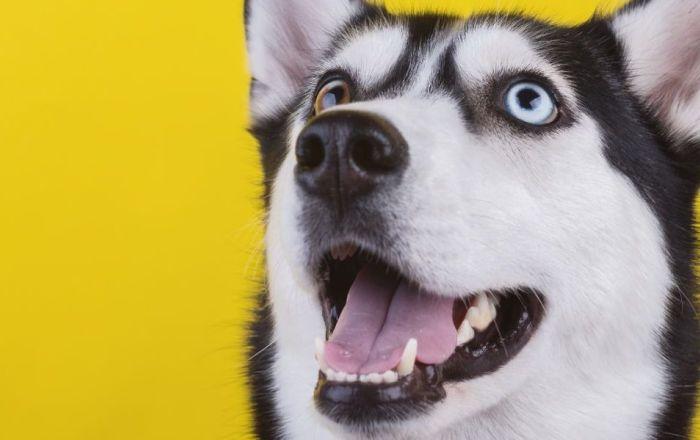 We're dog friendly!