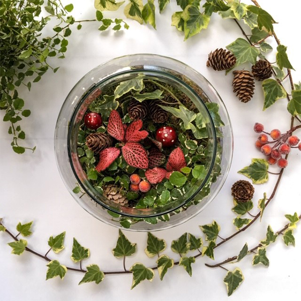 Seasonal Open Terrarium Paddington Central