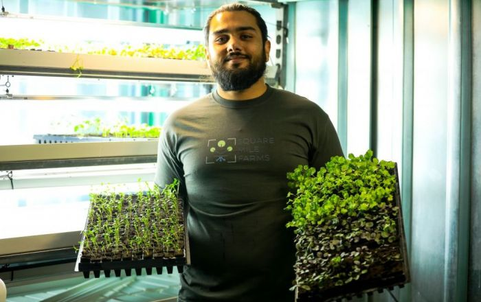 Vertical, hydroponic farming at 2 Kingdom Street